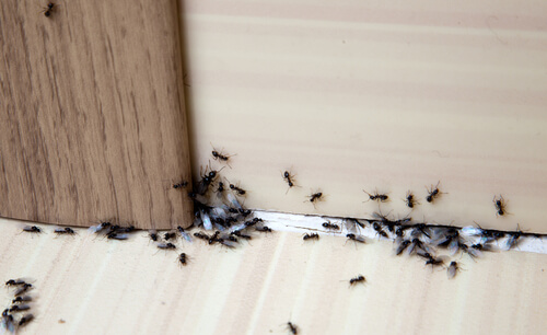 Deal with ants by locating and destroying the colony